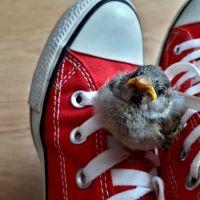 Cum înveți să iubești o vrabie. Povestea lui Ciripel