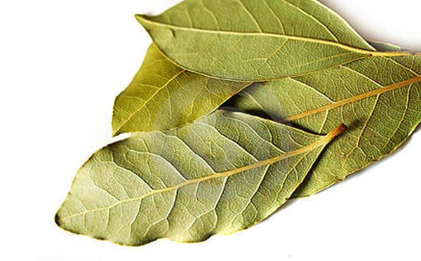 frunze-dafin