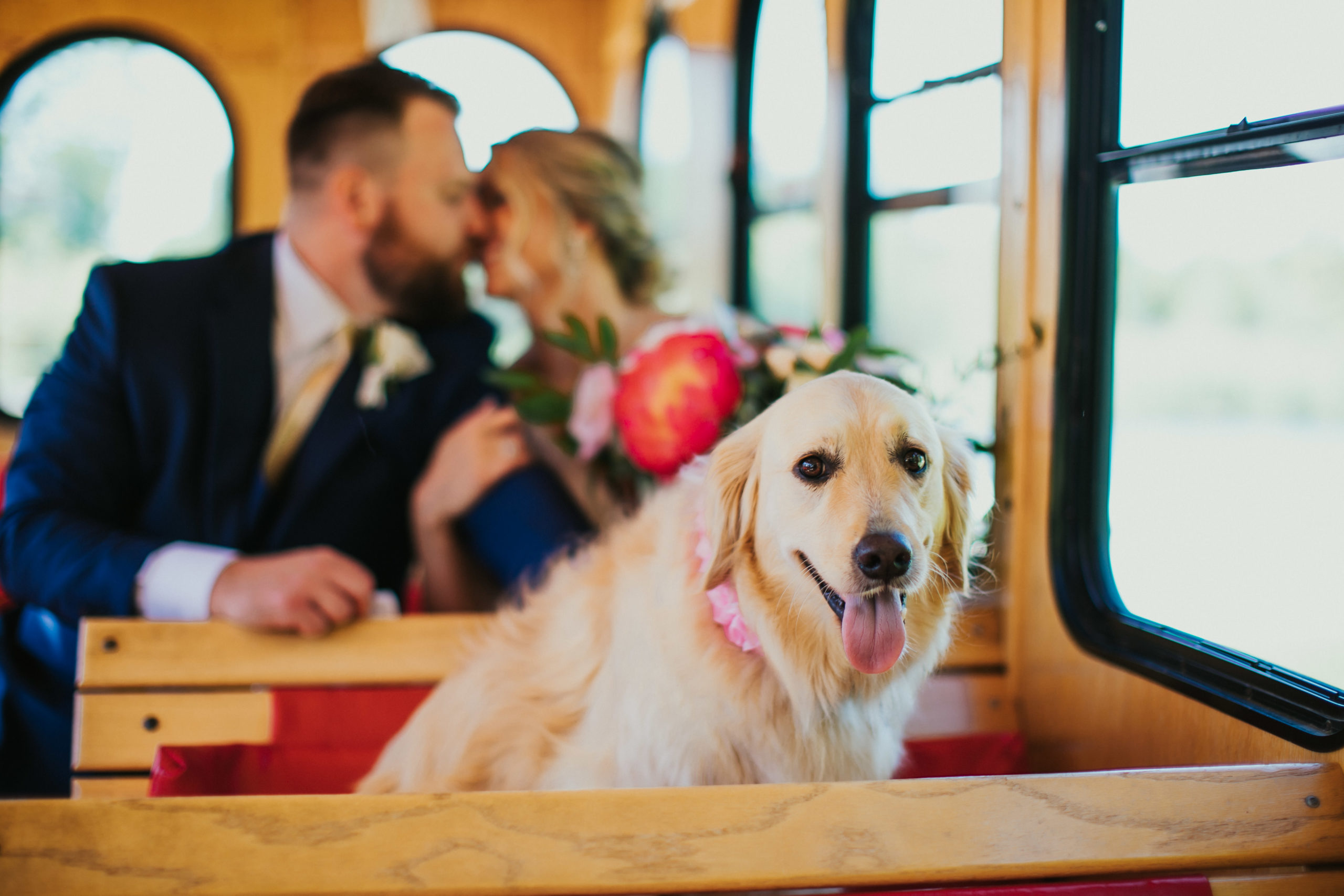 A dog sits on the Door County Trolley