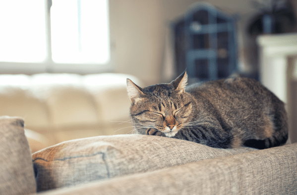 Is Your Couch Killing Your Cat?