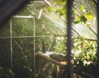 greenhouse-691704