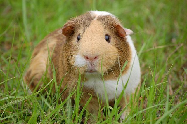 imagen alimentación para roedores