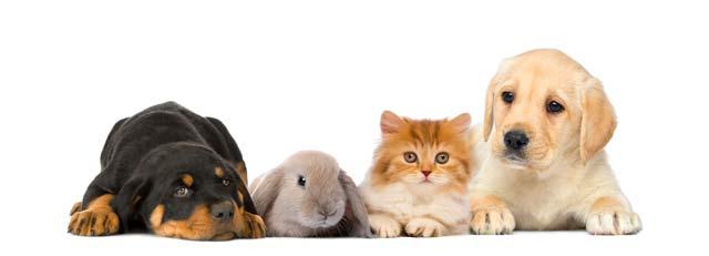 imagen libros para mascotas
