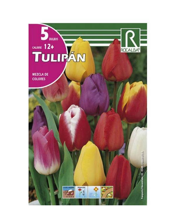 Imagen tulipán mezcla de colores Rocalba