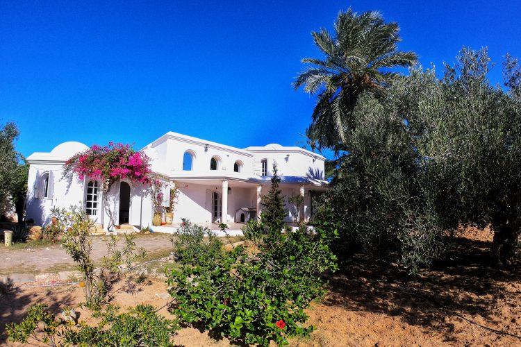 Oasis Kite Kitecamp Djerba