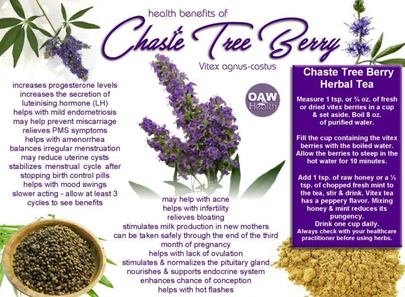 Chaste Tree Extract Side Effects   Wajitree co