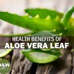 aloe vera leaf health benefits