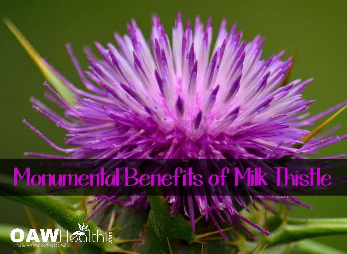 Monumental Benefits of Organic Milk Thistle Seed