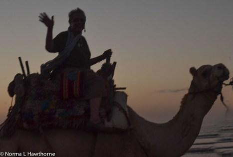 Sept24_CamelsSunset-11