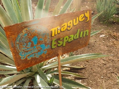 Espadin is the most common agave and the base for gin mezcal