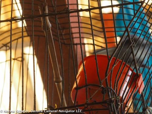 Bird cage, Cuetzalan del Progreso, Puebla