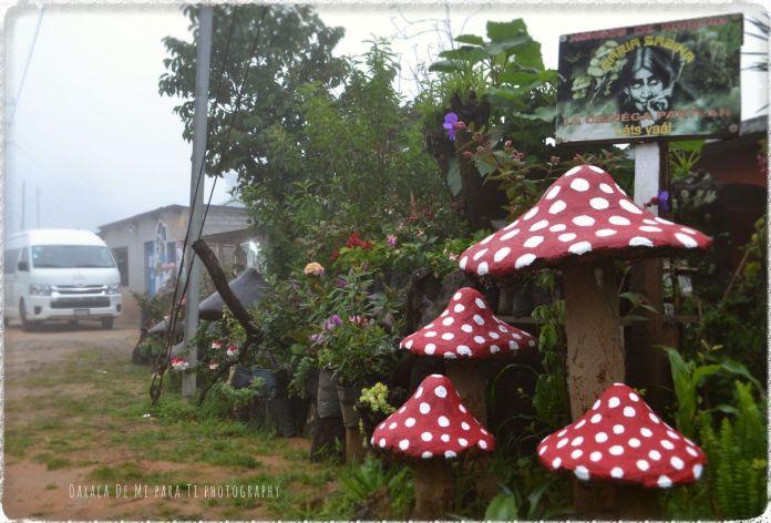 hongos de madera san jose del pacifico