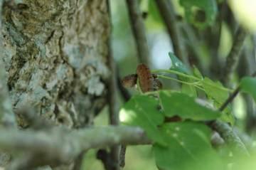 蔓の途中にヘビの子供を見つけました。