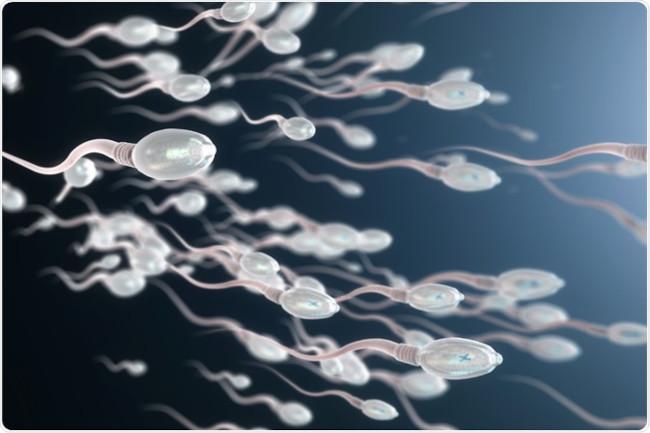 Ingin Sperma Mantul, Hindari Makan Kacang Berlebihan