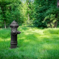 The Hydrant in the Glade