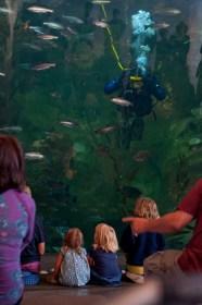 Aquarium08152013.02