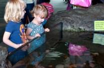 Aquarium08152013.04