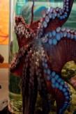 Aquarium08152013.08