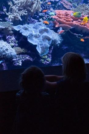 Aquarium08162013.17