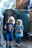 Aquarium08162013.28