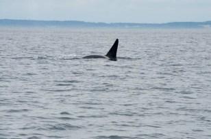WhaleWatching071220133