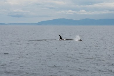 WhaleWatching071220139