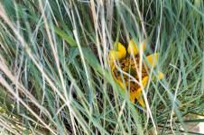 Emerging wildflowers....