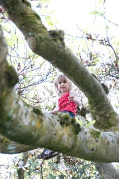 Up in her favorite climbing tree while the magnolia was in bloom