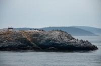 Cormorants & seals were plentiful on the route