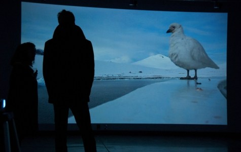 Video Installation Desert Blue Gives Audience Chills