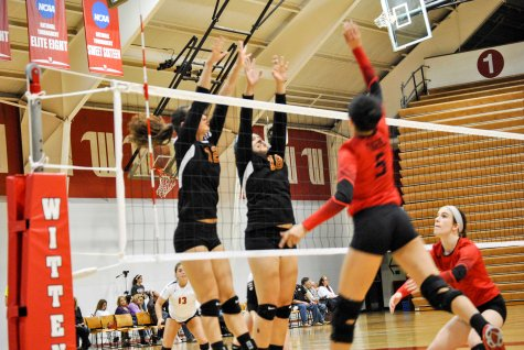 Volleyball Takes Set from Top-Seeded Tigers
