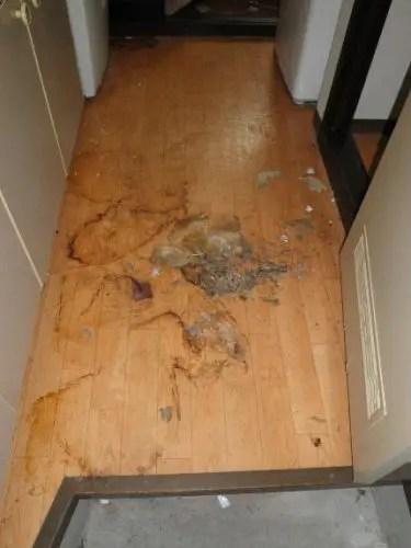 ゴミ屋敷の汚れがこびり付いた床 八尾市の掃除片付け業者トリプルエス