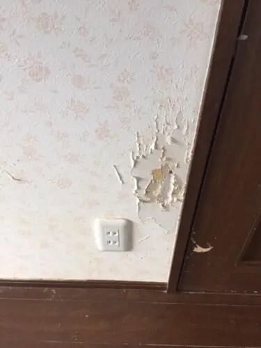 ネコに引っかかれボロボロになった壁