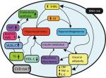 Retrieval in Metabolic Syndrome