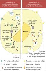 Molecular oncology in gynecologic cancer: Immunologic Response, Cytokines, Oncogenes, and Tumor Suppressor Genes