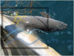 adopta un delfin (2)