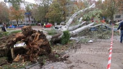 slobozia - copac cazut peste masina- 14