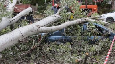 slobozia - copac cazut peste masina- 15