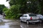 copac cazut slobozia 05