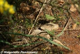 W bonusie dla spragnionych wrażeń - gonitwy z jaszczurkami