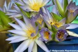 Świeże kwiaty dla Buddy