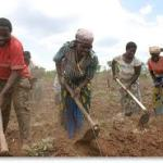 9000 Farmers Apply For N1billion Loan In Enugu