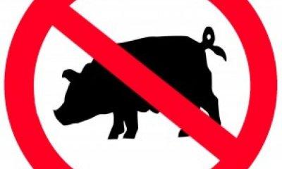 Почему свинина запрещена в Исламе