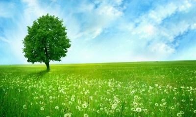 Сколько Пророк Адам жил в Раю и в который день Он покинул Рай