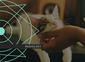 Pleural and Mediastinal Radiology Course photo including a dog
