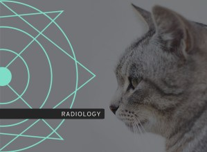 Urogenital Radiology course photo including a cat