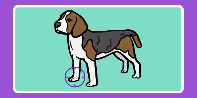 improving veterinary radiology