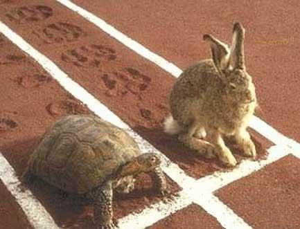 lievre-et-la-tortue éloge de la lenteur