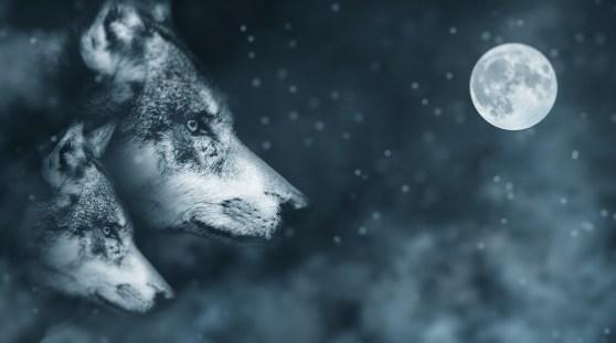 l'histoire des deux loups et du vieux chef indien Cherokee