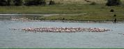 Objectif Tanzania vous presente le safari prive sur mesure africain Arusha National Park